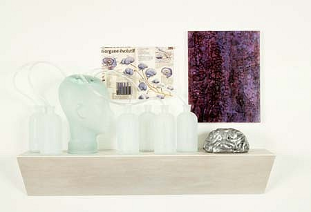 David Webster, Brain Shelf 1999, mixed media