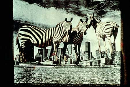Anita Steckel, Giant Zebras on NY early 80's, montage