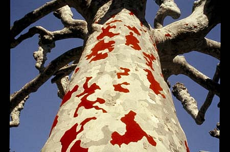 Yuki Nakamura, Trespass 2004, platano tree, venilia (wall paper)