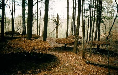 David Krepfle, Elevated Forest Floor 1992, pine needles, branches