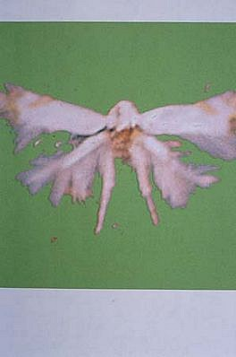 Ann Holcomb, De Rerum Nature (after Lucretius)Brilliant Small Moth 1999 - 2000, digital output on watercolor paper