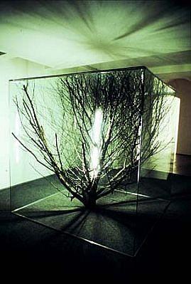 Milan Houser, Space 2 2003, glass, treetop, light