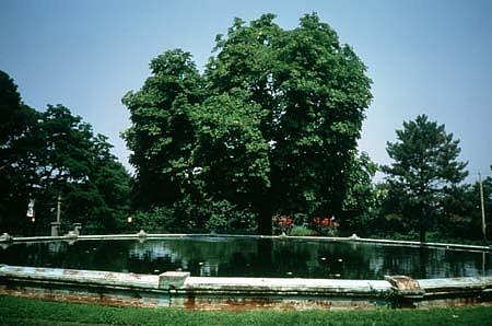 Barbara Edelstein, Nectar for Neptune 1990, horse chestnut tree, neptune pool, water