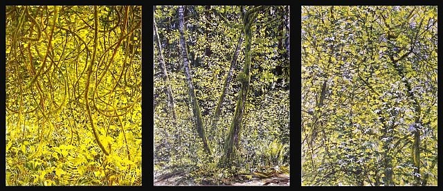 Kathleen Fruge Brown, Natural Light: Thicket, Grove, Canopy 2006, vitreous enamel on steel