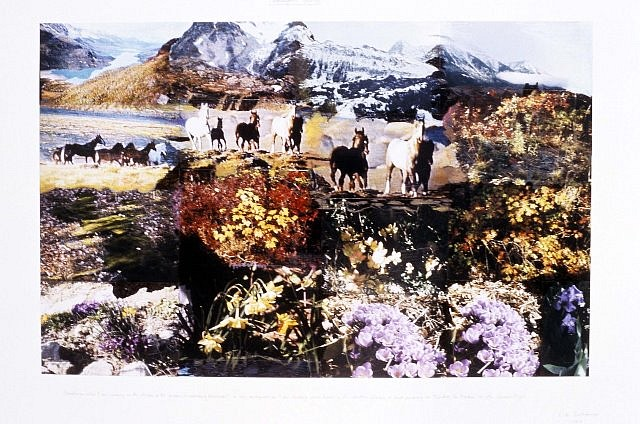 Peter Hutchinson, Remington's Garden 1999