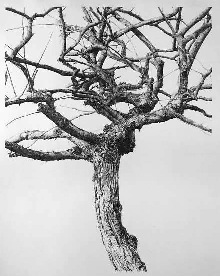 Sandra Allen, Antithesis 2004, pencil on paper