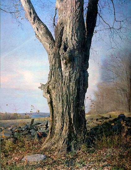 Trey Friedman, Trees on a Line #49 2011, oil on canvas