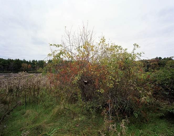 Barbara Bosworth, Bird nest in the brush at meadow's edge 2011, archival inkjet
