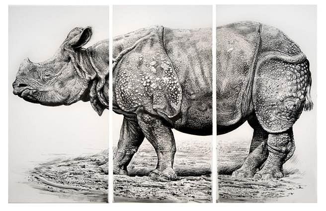 Richard Shaefer, Rhino (in progress) 2012, charcoal on vellum mounted on aluminum