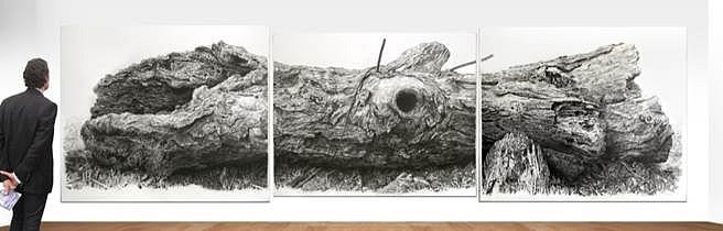 Richard Shaefer, White Oak 2013, charcoal on vellum mounted on aluminum