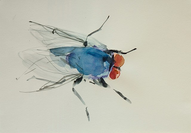 Michelle Charles, Blue Fly 2011, paint on paper