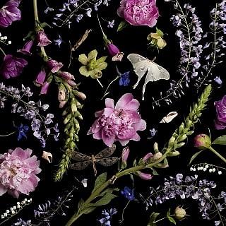 Paulette Tavormina, Peonies and Wisteria 2014, archival digital pigment print